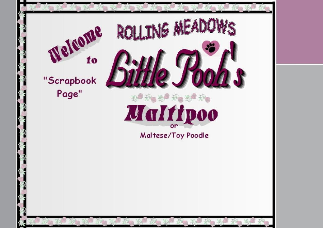 Maltipoo| Maltepoo| Maltese Poodle Puppies for Sale| Iowa