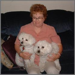 Bichon Frise Adults